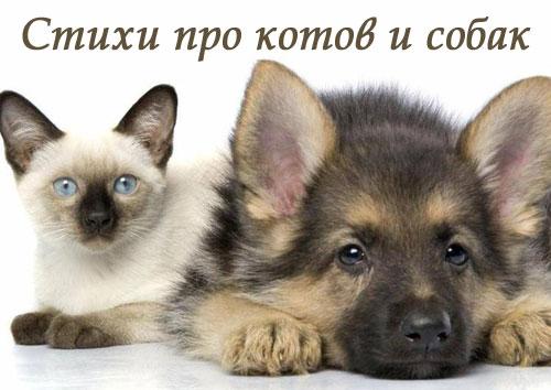 картинки котов и собак